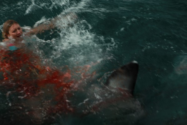 Rogue sharks attack woman 600x400